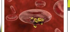 تشخیص مالاریا در اهواز