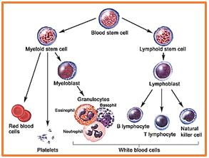 تشخیص بیماریهای نقص ایمنی