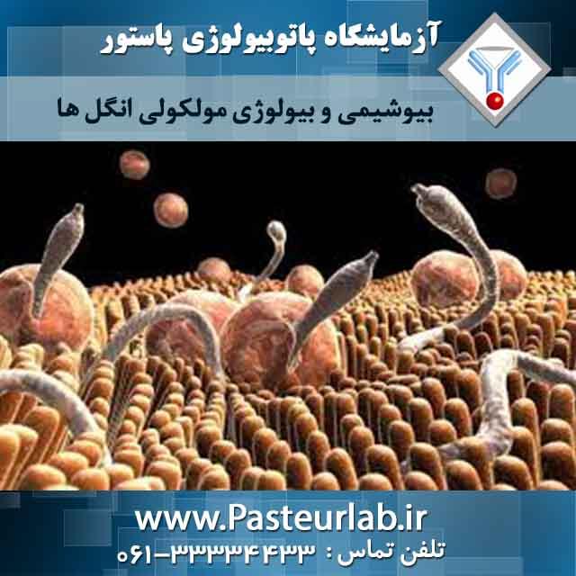 بیوشیمی و بیولوژی مولکولی انگل ها 2