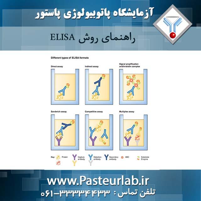 راهنمای روش ELISA
