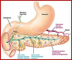 هورمون های لوزالمعده یا پانکراس