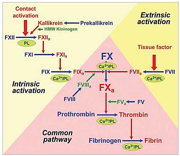 مسیر خارجی انعقاد(Extrinsic pathway)