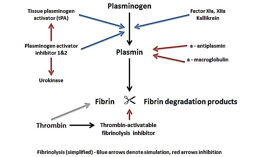 فیبرینولیز طبیعی