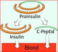 پپتید C (C- Peptide)