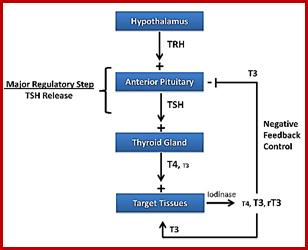 هورمون محرکه تیروئید (TSH)