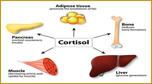 کورتیزول (Cortisol)