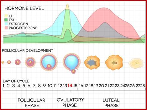 هورمون محرکه فولیکولی (FSH) و لوتروپین (LH)