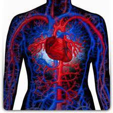 دستگاه گردش خون